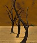 Dancing_trees_Deathvlei_thumb