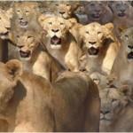 Safari Park Shenzhen