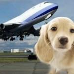 Taking a Shenzhen Pet overseas via Hong Kong by Accompanied Baggage