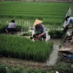 China's Agricultural Sector to get Tax Breaks