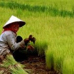 China to Push Agricultural Reforms to Speed Up Modernization